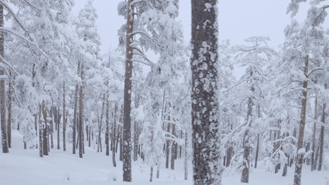 Travelling shot of winter forest Image