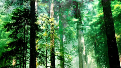 Forest 36133 Stock Video Footage