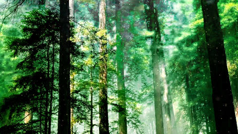 Forest 36133 CG動画素材