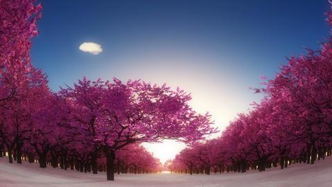 桜 stock footage