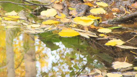Autumn leaves in water Stock Video Footage
