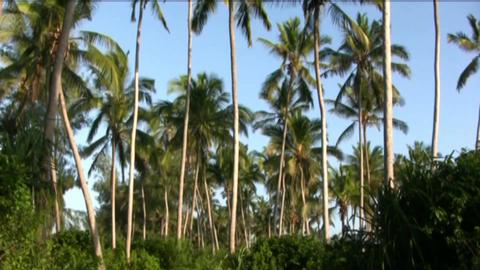 Palms Footage