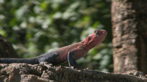 reptile Stock Video Footage