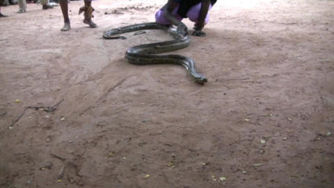 snake Stock Video Footage
