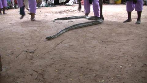 snake Footage