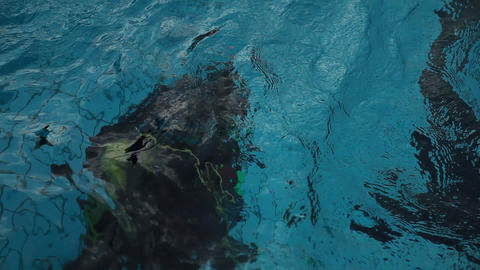 diving pool 09 Stock Video Footage