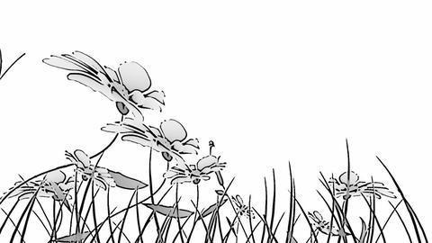 Black and white flowers Stock Video Footage