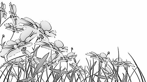 Black and white flowers Animation
