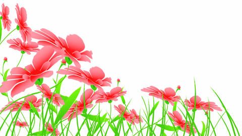 red flowers Stock Video Footage