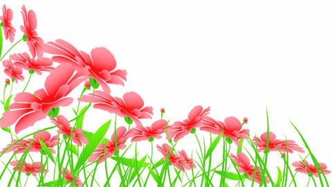 red flowers Animation