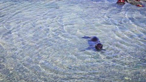 Playful Sea Lion stock footage