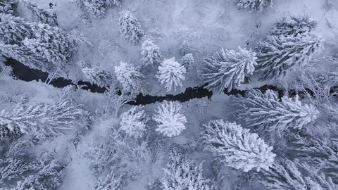 Top view of winter mountain river surrounded by trees and banks of snow-covered Footage