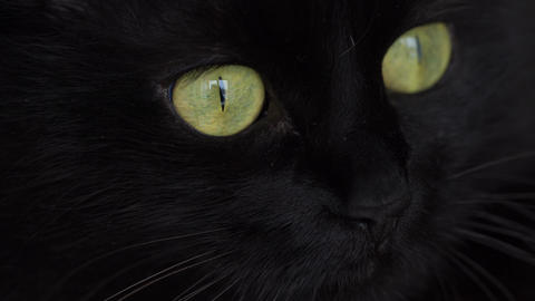 Cute muzzle of a black cat Footage