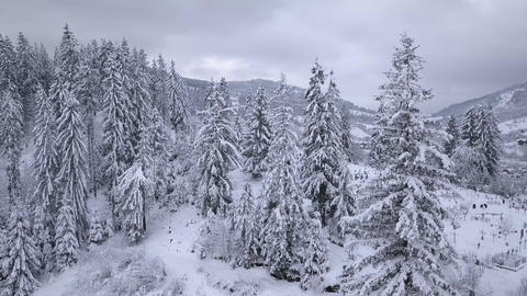 3 in 1 video with different speeds. Flight over snowy mountain coniferous forest Footage