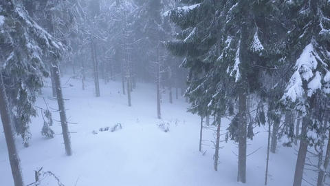Flight over snowstorm in a snowy mountain coniferous forest, uncomfortable 영상물