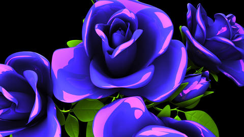 Blue Roses Bouquet On Black Background CG動画