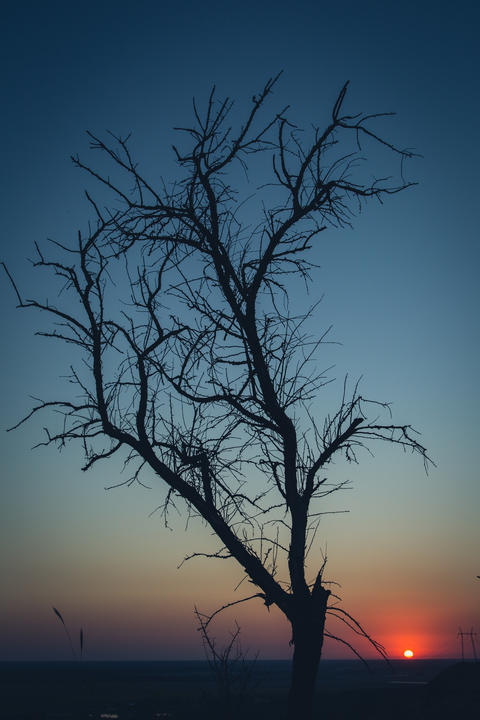 Tree silhouette at sunset フォト
