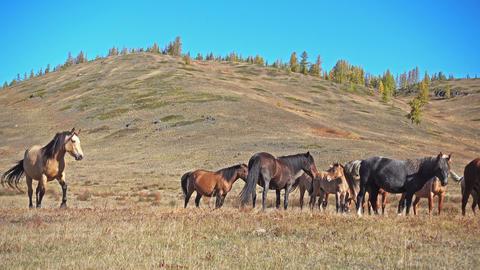 Horses Graze Footage