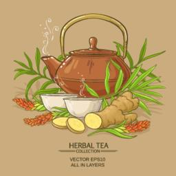 ginger tea illustration ベクター