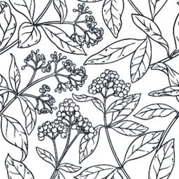 allspice seamless pattern Vector