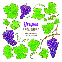 grapes elements set Vector