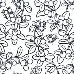 cranberry seamless pattern Vector