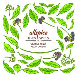 allspice elements set Vector