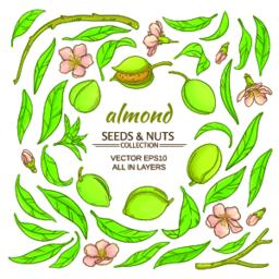 almond elements set Vector