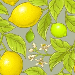 lemon vector pattern Vector