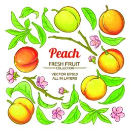 peach elements vector set Vector