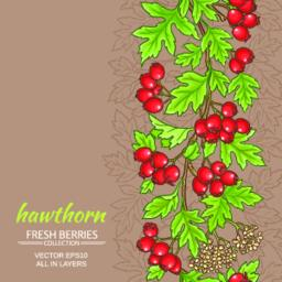 hawthorn vector background Vector
