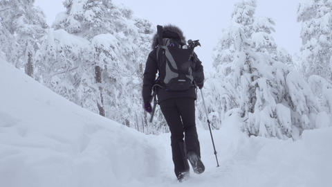 Hiker walking into the snowy forest Footage