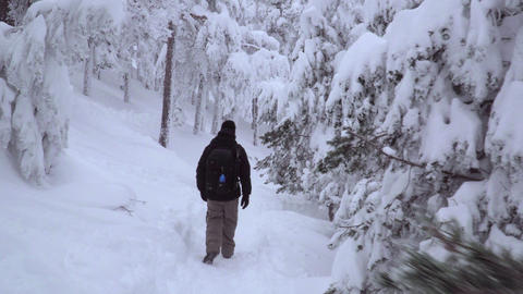 Tracking shot of man entering snowy forest Footage