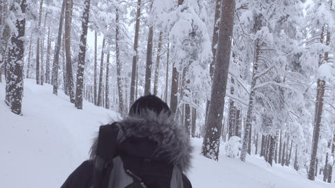 Tracking shot of woman hiking into snowy forest Footage