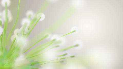 Spring or summer abstract season nature background with green plants and bokeh M Animation