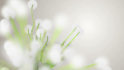 Spring or summer abstract season nature background with green plants and bokeh Animation