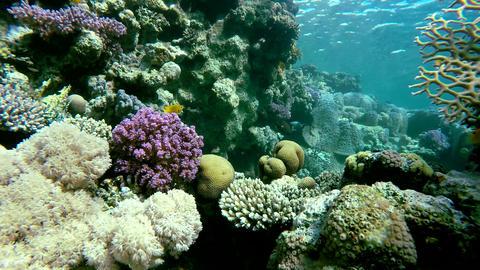 Warm tropical sea. Animal, Snorkeling Footage