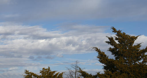Beautiful landscape scene with sky, clouds and Juniper trees Archivo