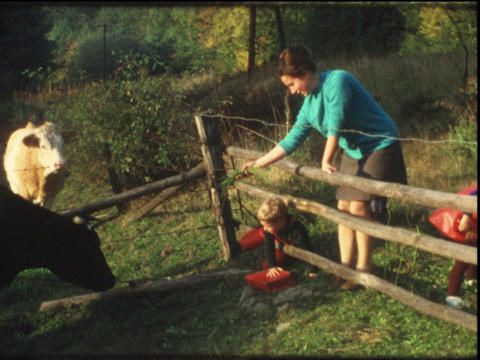 Family watches cows Footage