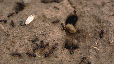 the ants crawl into the anthill Live Action