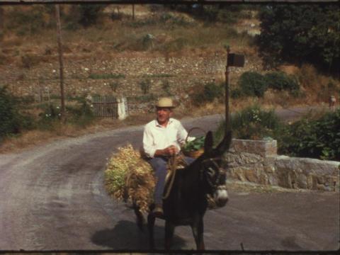 Man riding mule Footage