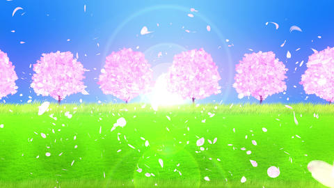 Cherry Trees In Full Bloom On The Hill, Cherry Blossom… Stock Video Footage