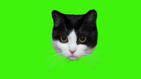 CAT-001 ビデオ
