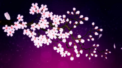 Cherry tree in full bloom, Purple CG動画