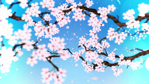 Cherry tree in full bloom, Loop, Blue CG動画