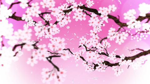 Cherry tree in full bloom, Loop, Pink CG動画