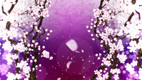 Cherry tree in full bloom, Loop, Purple Animation