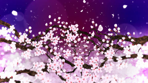Cherry tree in full bloom, Loop, Purple CG動画
