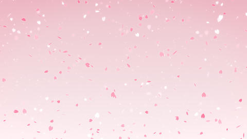 Sakura cherry blossom falling pink background, looped CG動画素材