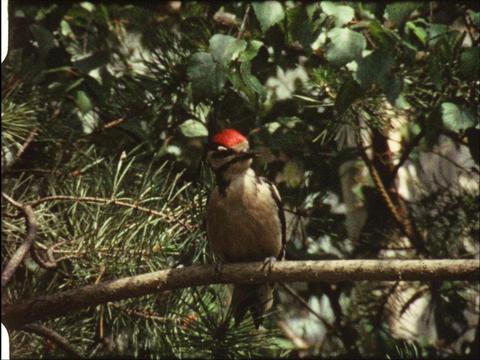 Woodpecker 2 Footage